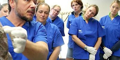 Der Dozent erklärt den Teilnehmerinnen etwas am anatomischen Hundepräparat