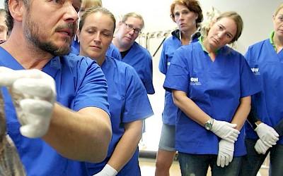 Am Präparat wird der Anatomieunterricht leicht verständlich