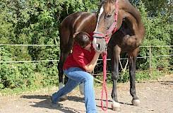 Dr. Alice Manders behandelt ein Pferd osteotherapeutisch