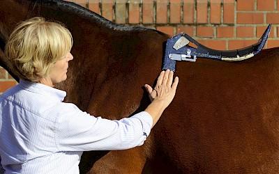 Die Dozentin überprüft am Pferd den Sitz des Sattelbaumes