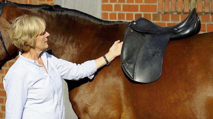 Ein optimal gesatteltes Pferd