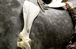 Darstellung einer Ursache-Folge-Kette mit Hilfe von Modellen und dem Pferd