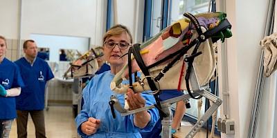 Dr. Rümens erklärt etwas am Modell eines Pferdekopfes