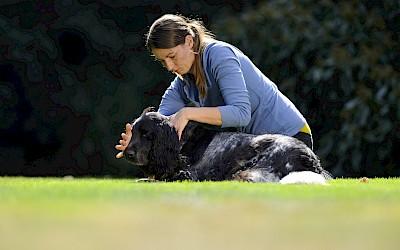 Eine Therapeutin behandelt einen Hund