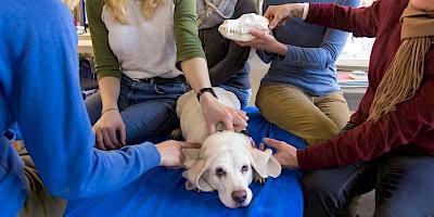 Kranio-Sakrale-Therapie beim Hund