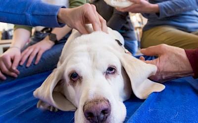 Der Schädel eines Hundes wird abgetastet
